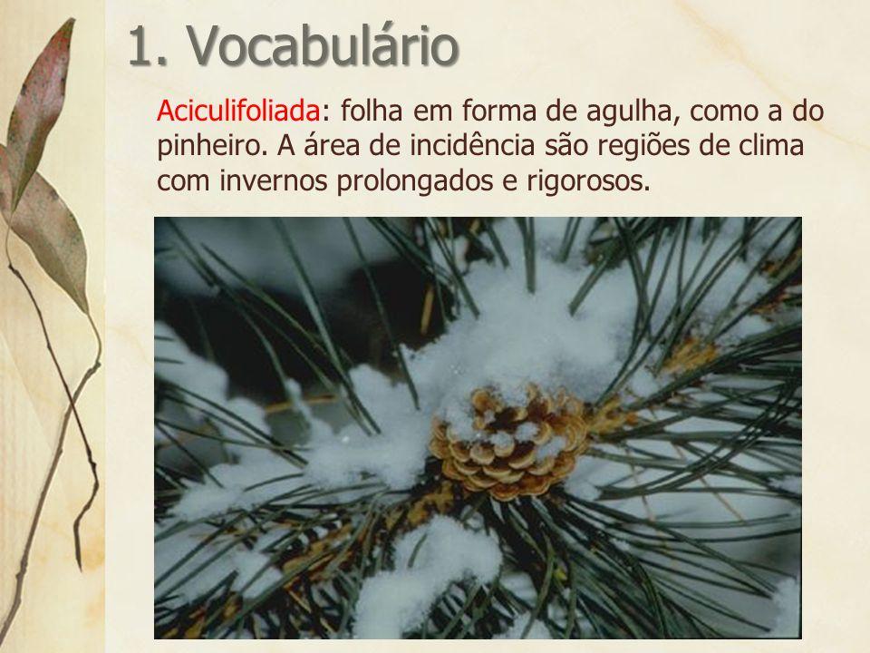 1. Vocabulário