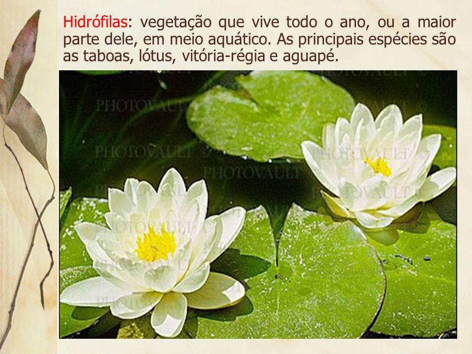 Hidrófilas: vegetação que vive todo o ano, ou a maior parte dele, em meio aquático.