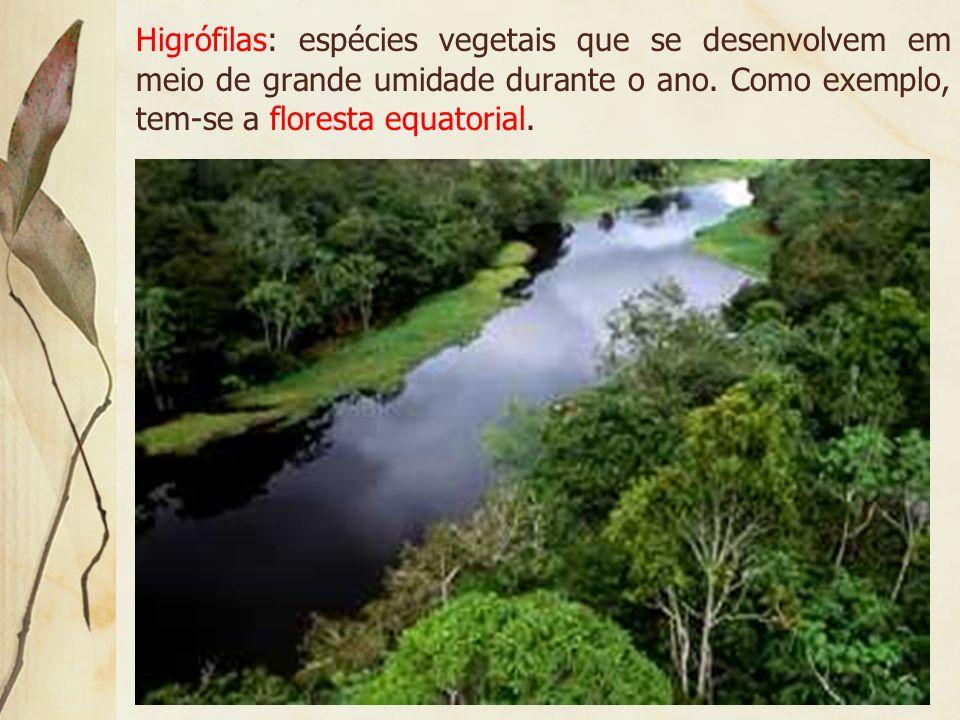 Higrófilas: espécies vegetais que se desenvolvem em meio de grande umidade durante o ano.