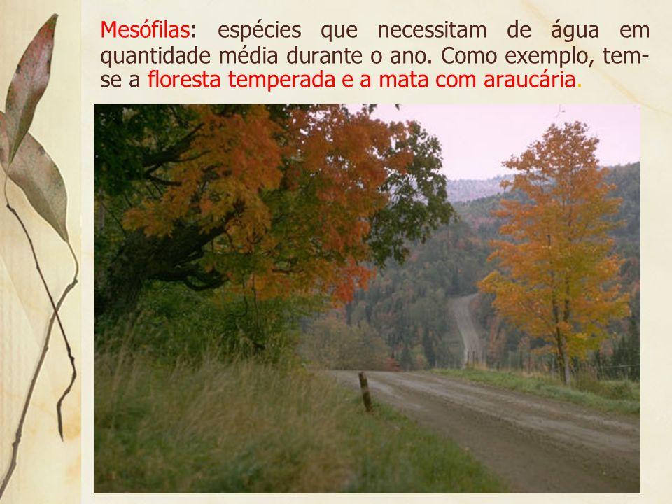 Mesófilas: espécies que necessitam de água em quantidade média durante o ano.