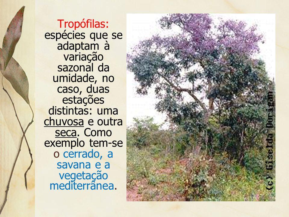 Tropófilas: espécies que se adaptam à variação sazonal da umidade, no caso, duas estações distintas: uma chuvosa e outra seca.