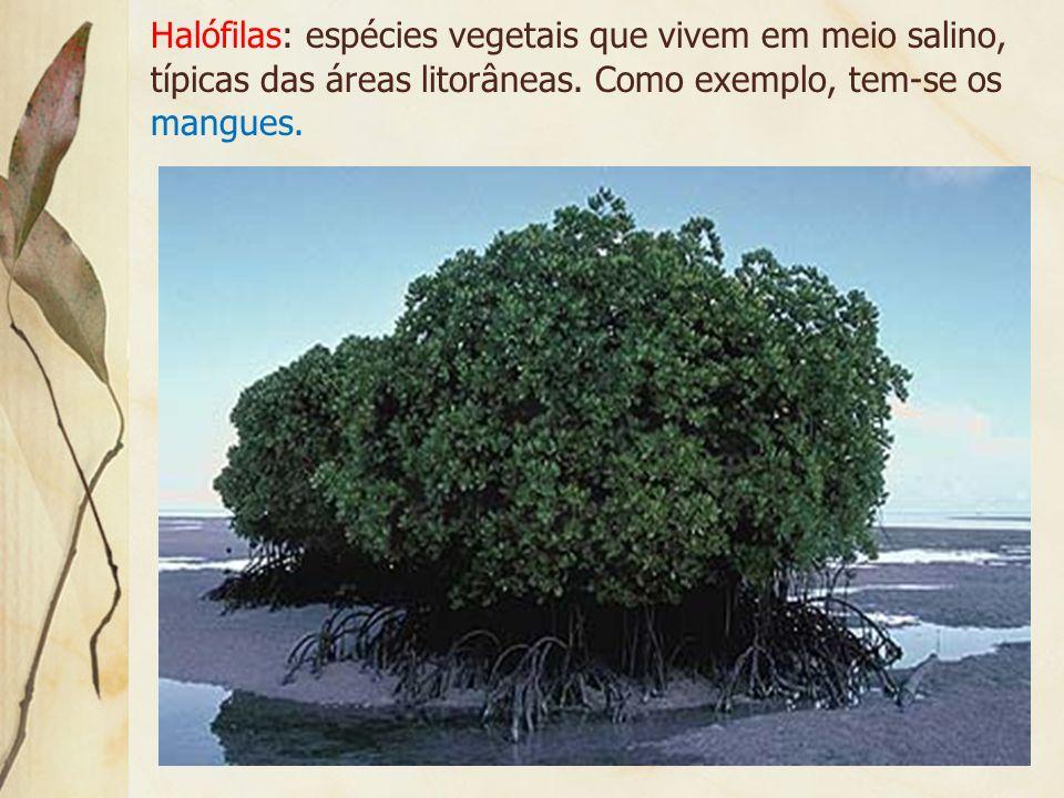 Halófilas: espécies vegetais que vivem em meio salino, típicas das áreas litorâneas.