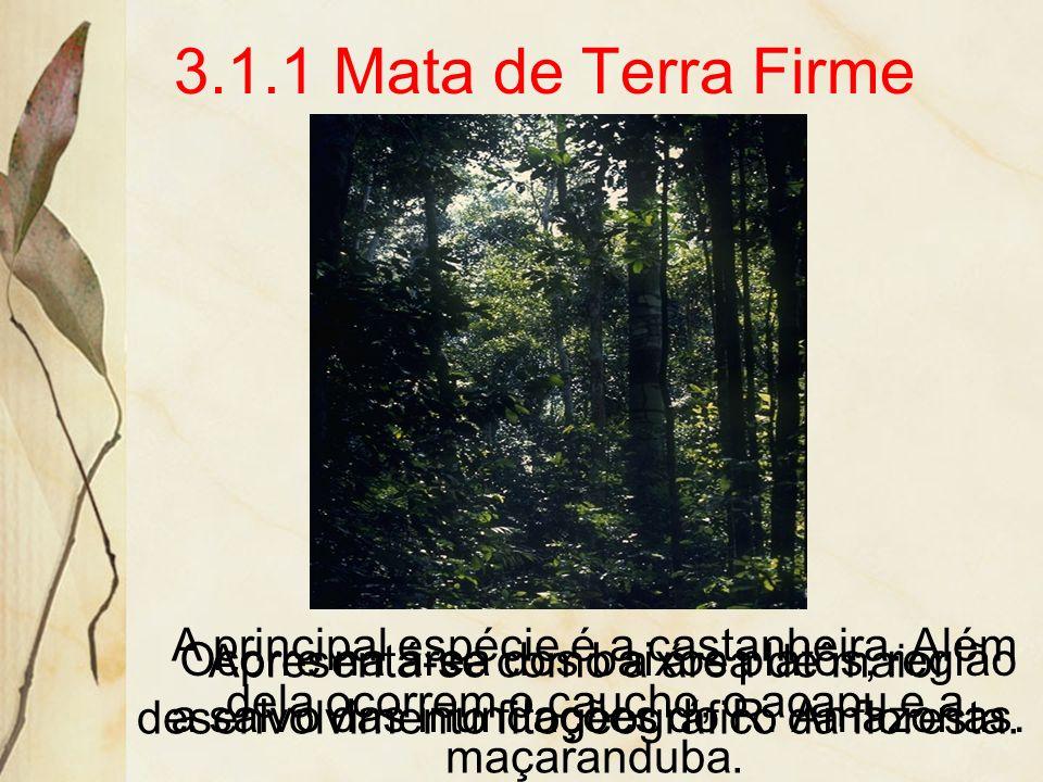 3.1.1 Mata de Terra FirmeA principal espécie é a castanheira. Além dela ocorrem o caucho, o acapu e a maçaranduba.
