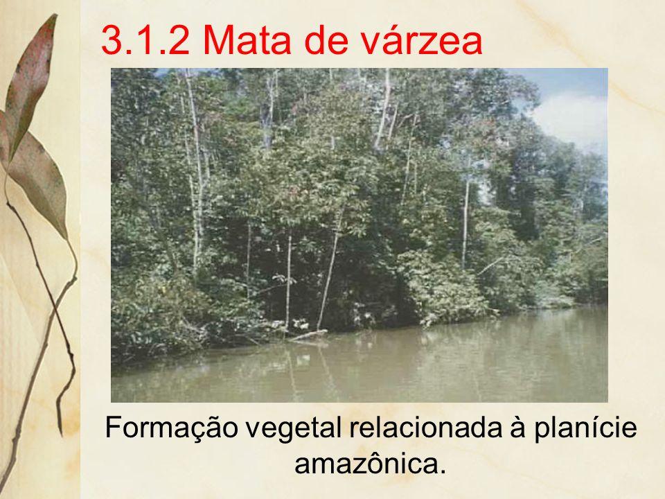 Formação vegetal relacionada à planície amazônica.