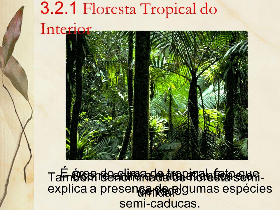 3.2.1 Floresta Tropical do Interior
