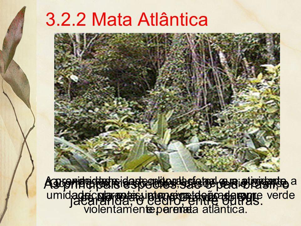 3.2.2 Mata Atlântica A grande densidade populacional e a atividade agrícola mais intensiva degradaram, violentamente, a mata atlântica.