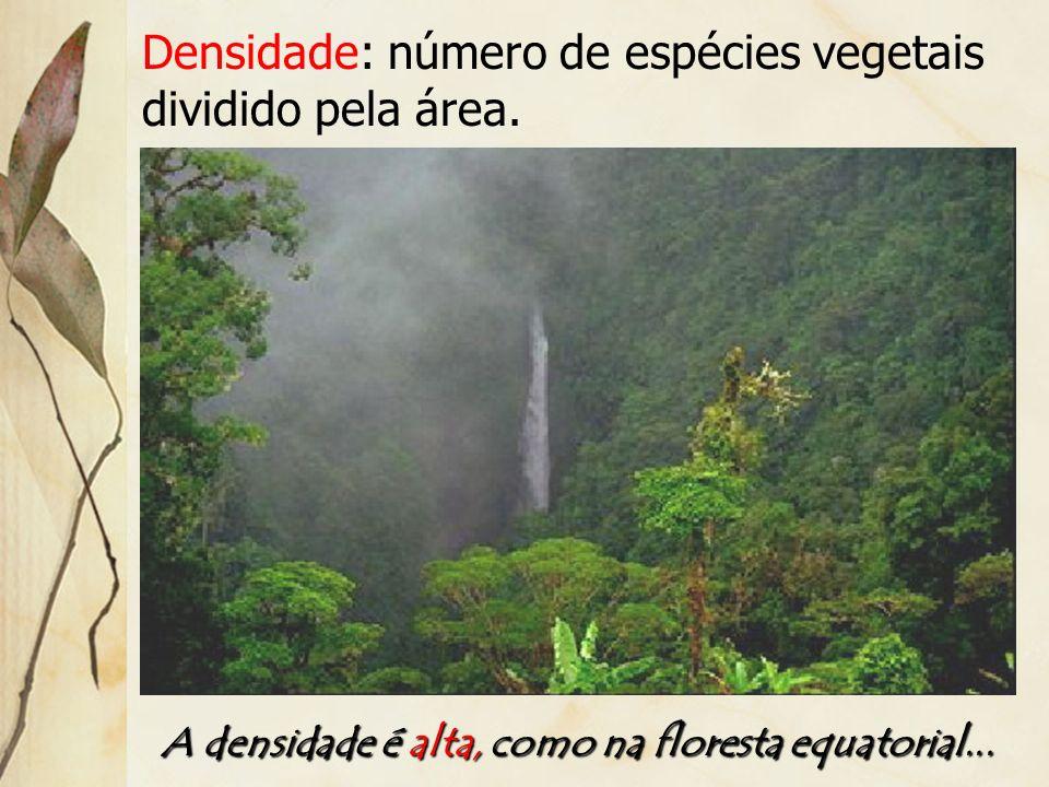A densidade é alta, como na floresta equatorial...