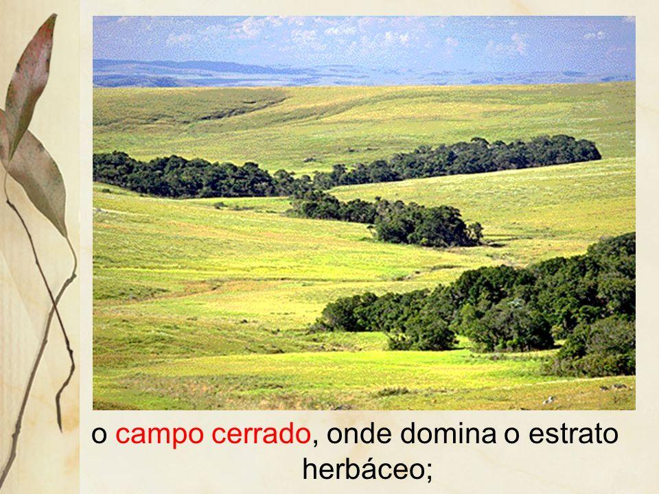 o campo cerrado, onde domina o estrato herbáceo;