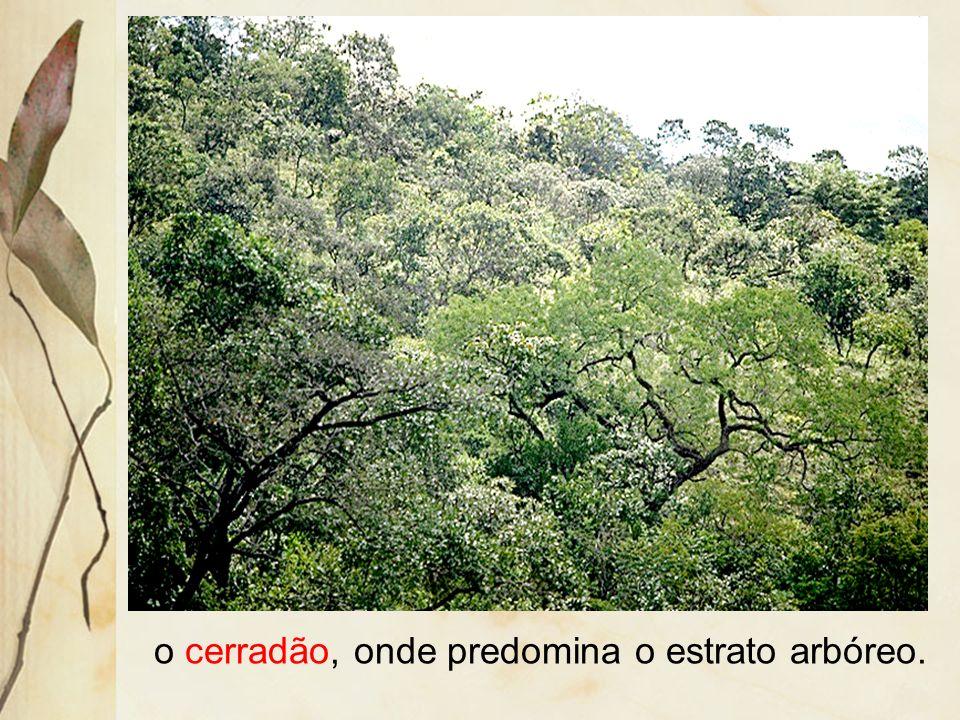 o cerradão, onde predomina o estrato arbóreo.