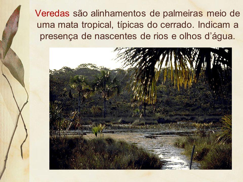 Veredas são alinhamentos de palmeiras meio de uma mata tropical, típicas do cerrado.