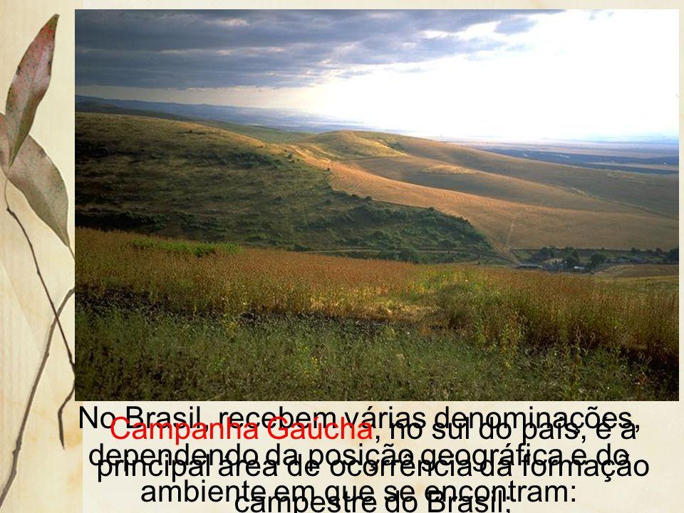 No Brasil, recebem várias denominações, dependendo da posição geográfica e do ambiente em que se encontram: