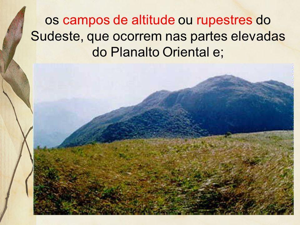 os campos de altitude ou rupestres do Sudeste, que ocorrem nas partes elevadas do Planalto Oriental e;
