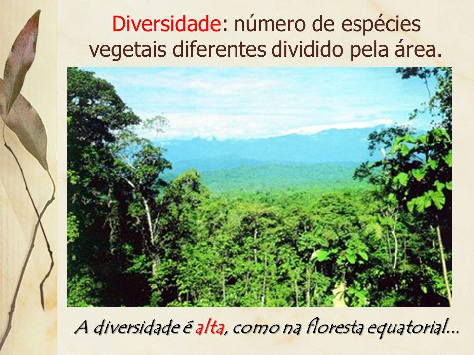 A diversidade é alta, como na floresta equatorial...
