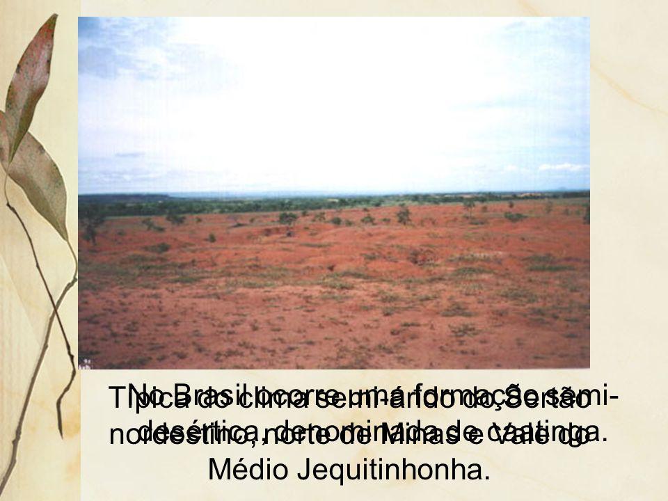 No Brasil ocorre uma formação semi-desértica, denominada de caatinga.