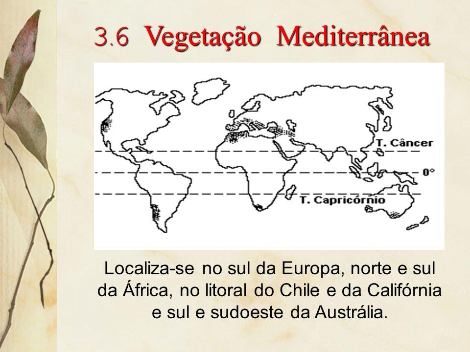 3.6 Vegetação Mediterrânea
