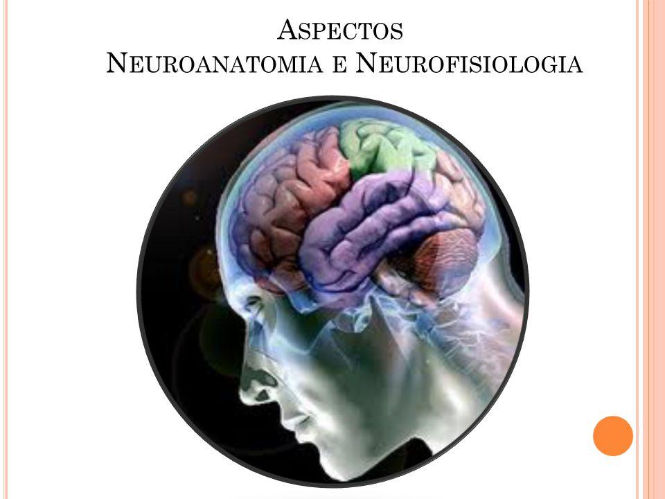 Aspectos Neuroanatomia e Neurofisiologia