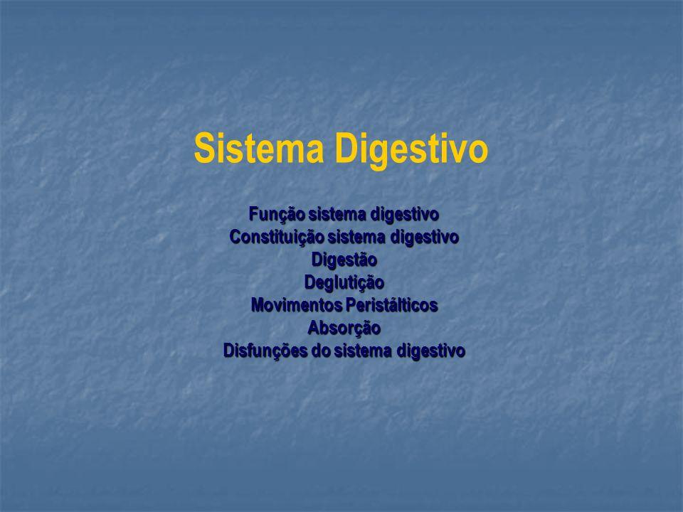 Sistema Digestivo Função sistema digestivo