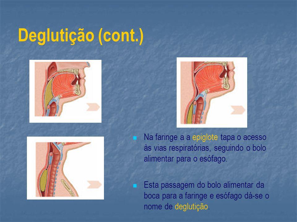 Deglutição (cont.) Na faringe a a epiglote tapa o acesso às vias respiratórias, seguindo o bolo alimentar para o esófago.