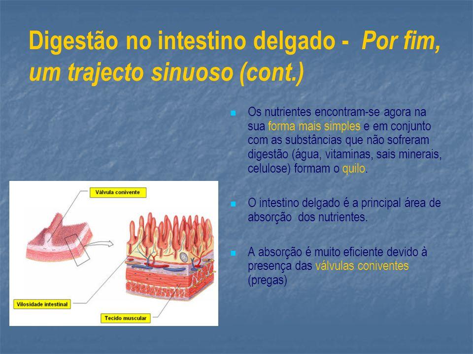 Digestão no intestino delgado - Por fim, um trajecto sinuoso (cont.)