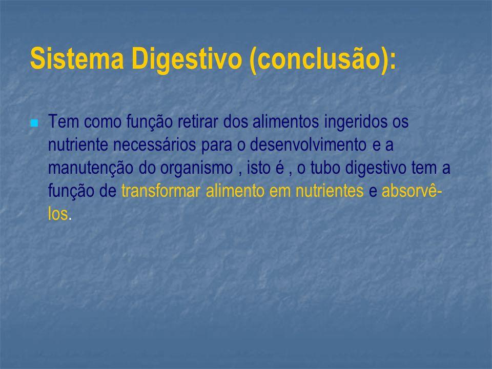 Sistema Digestivo (conclusão):