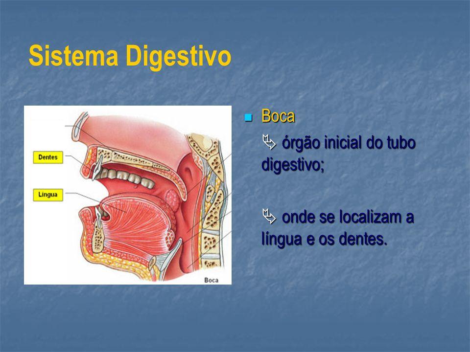 Sistema Digestivo Boca  órgão inicial do tubo digestivo;