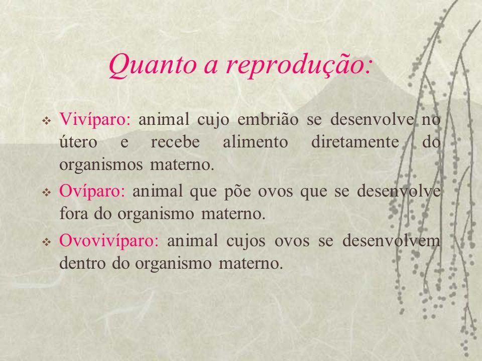 Quanto a reprodução: Vivíparo: animal cujo embrião se desenvolve no útero e recebe alimento diretamente do organismos materno.