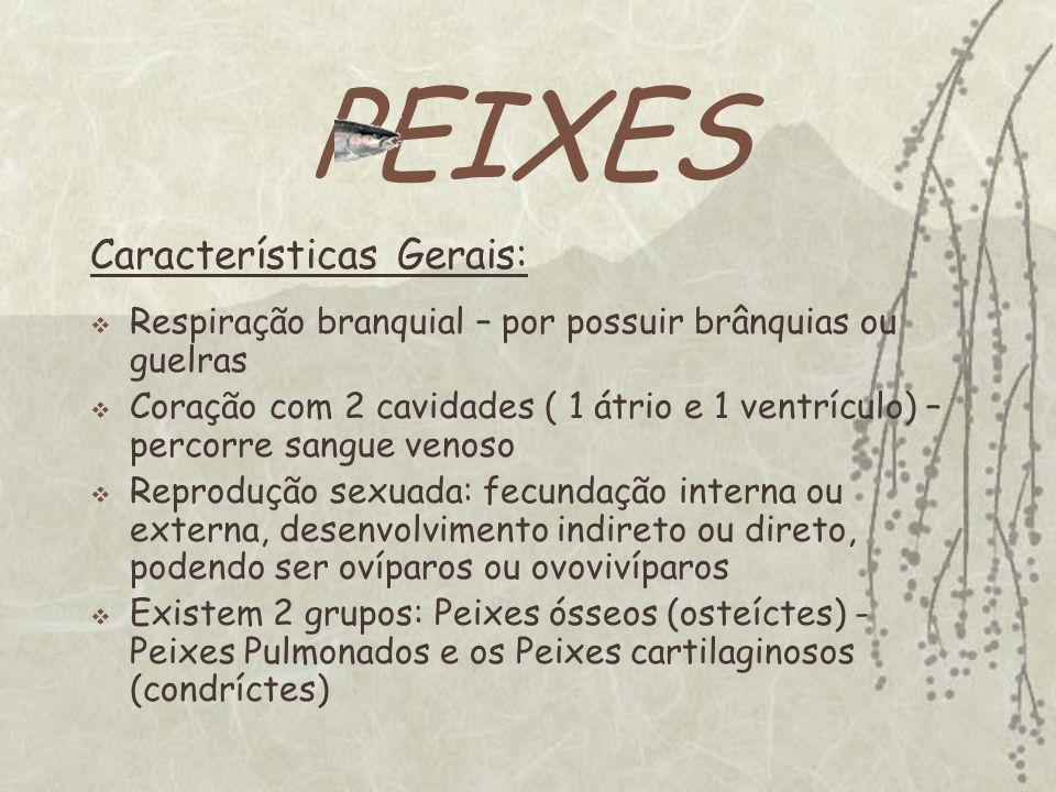 PEIXES Características Gerais: