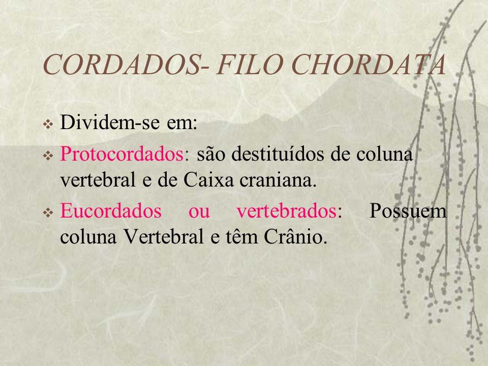 CORDADOS- FILO CHORDATA