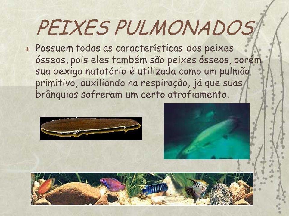 PEIXES PULMONADOS