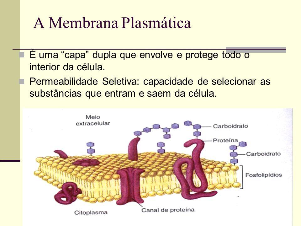 A Membrana PlasmáticaÉ uma capa dupla que envolve e protege todo o interior da célula.