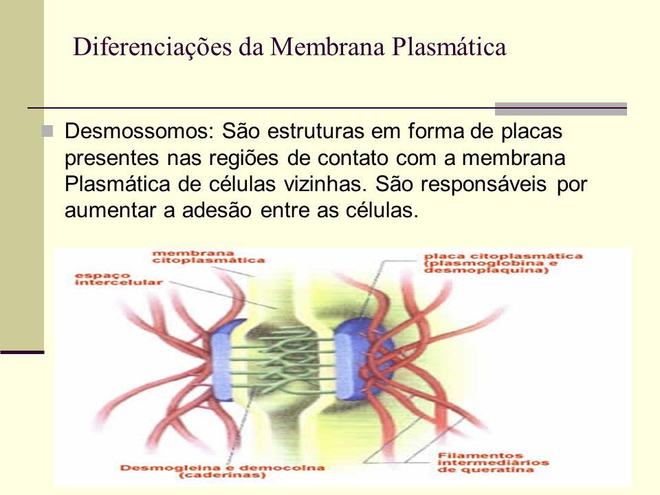 Diferenciações da Membrana Plasmática