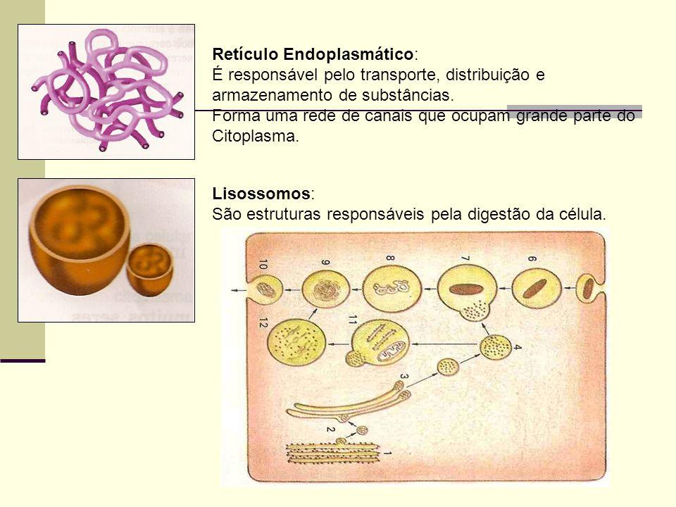 Retículo Endoplasmático: