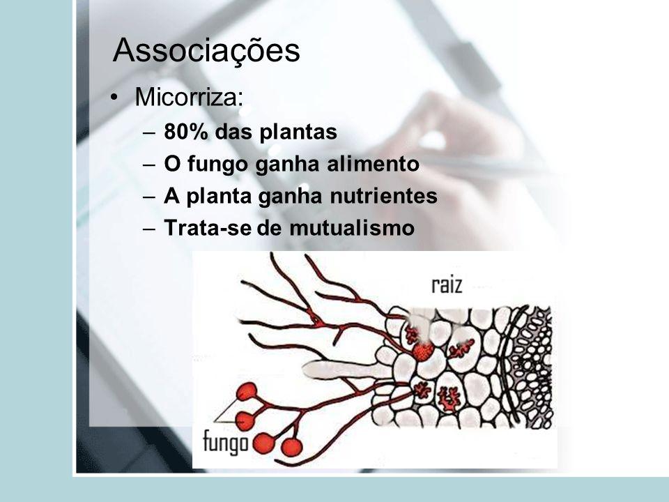 Associações Micorriza: 80% das plantas O fungo ganha alimento