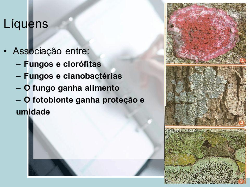 Líquens Associação entre: Fungos e clorófitas Fungos e cianobactérias