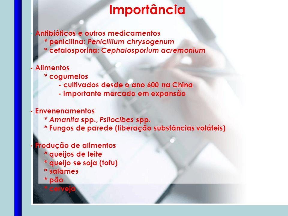 Importância - Antibióticos e outros medicamentos