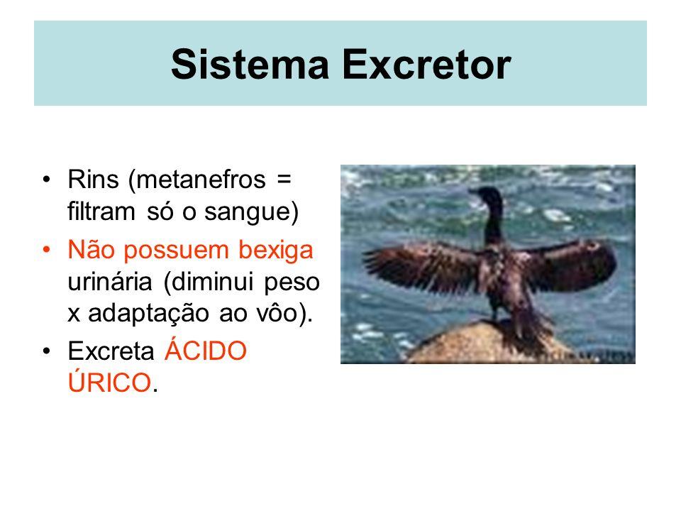 Sistema Excretor Rins (metanefros = filtram só o sangue)