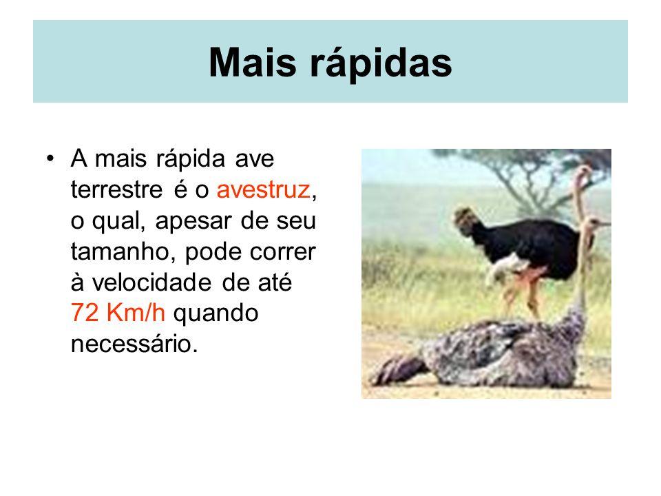 Mais rápidas A mais rápida ave terrestre é o avestruz, o qual, apesar de seu tamanho, pode correr à velocidade de até 72 Km/h quando necessário.