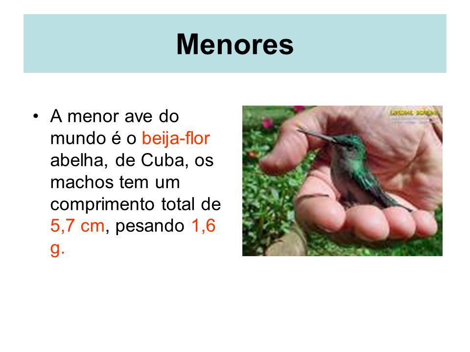 Menores A menor ave do mundo é o beija-flor abelha, de Cuba, os machos tem um comprimento total de 5,7 cm, pesando 1,6 g.