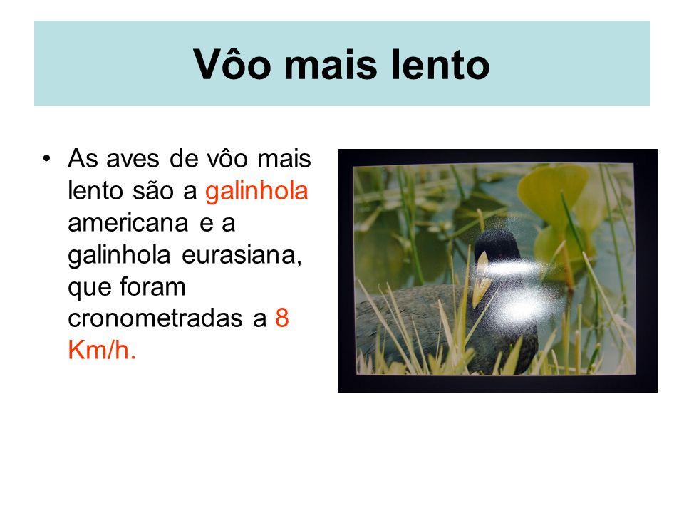 Vôo mais lento As aves de vôo mais lento são a galinhola americana e a galinhola eurasiana, que foram cronometradas a 8 Km/h.