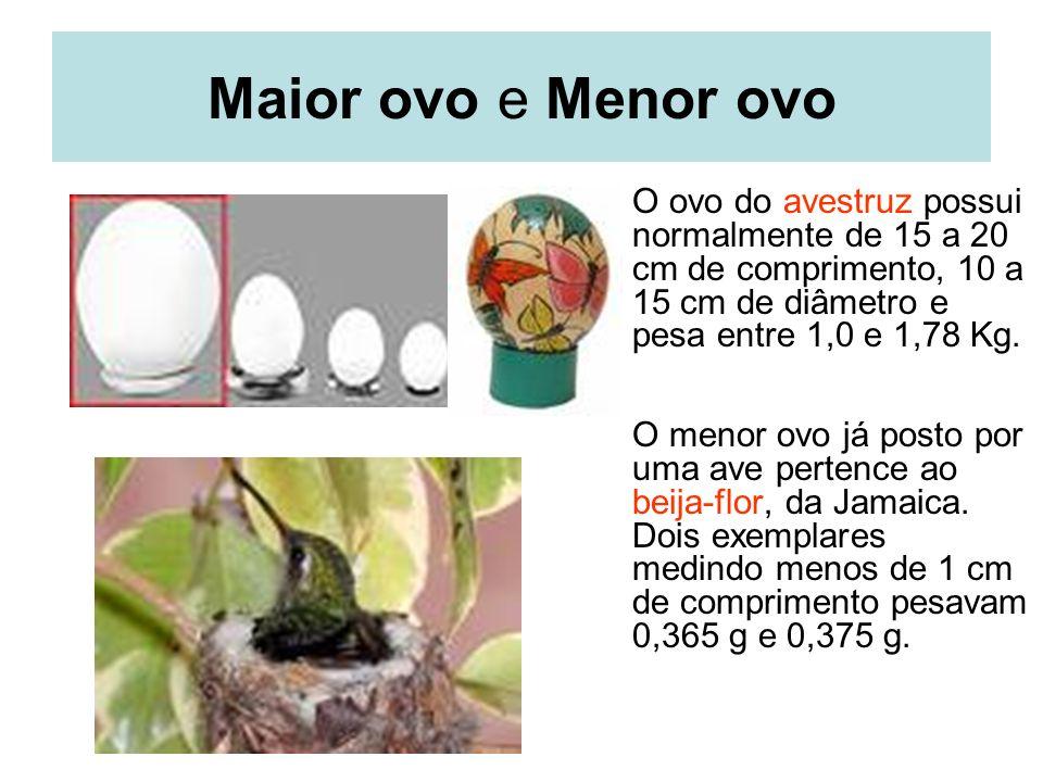 Maior ovo e Menor ovo