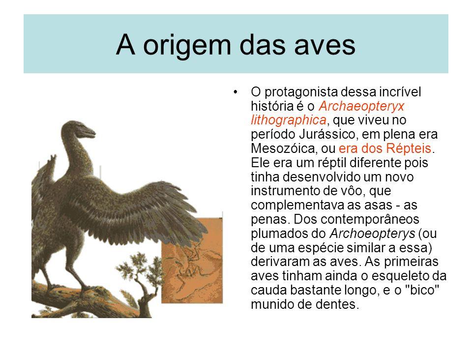 A origem das aves