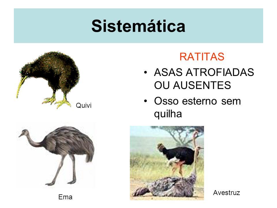 Sistemática RATITAS ASAS ATROFIADAS OU AUSENTES