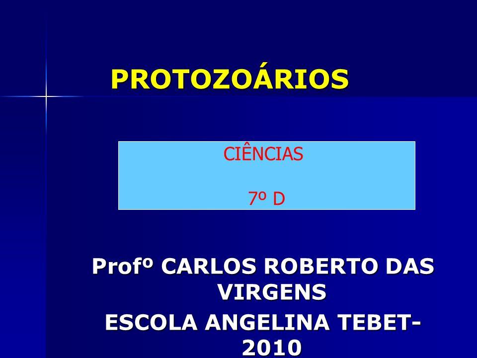Profº CARLOS ROBERTO DAS VIRGENS ESCOLA ANGELINA TEBET-2010