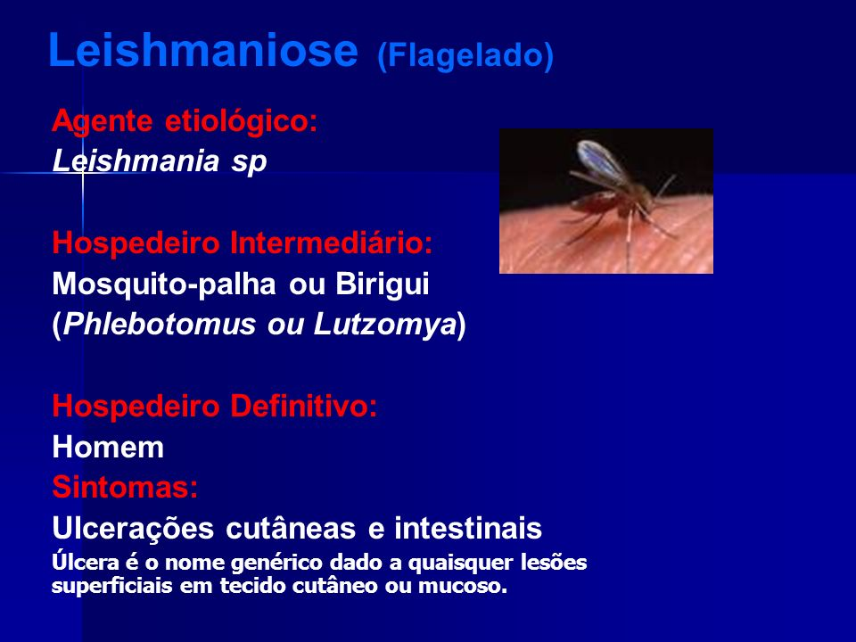 Leishmaniose (Flagelado)