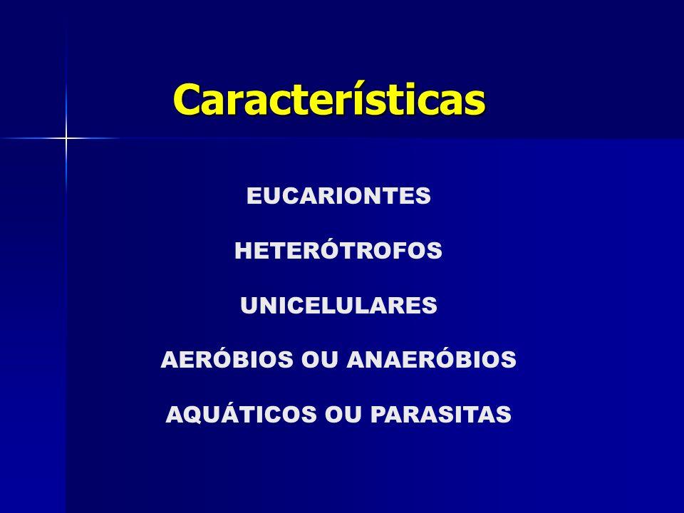 Características EUCARIONTES HETERÓTROFOS UNICELULARES