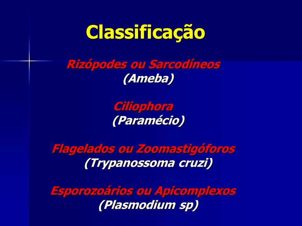 Classificação Rizópodes ou Sarcodíneos (Ameba) Ciliophora (Paramécio)