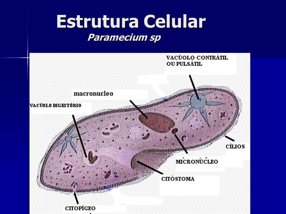 Estrutura Celular Paramecium sp