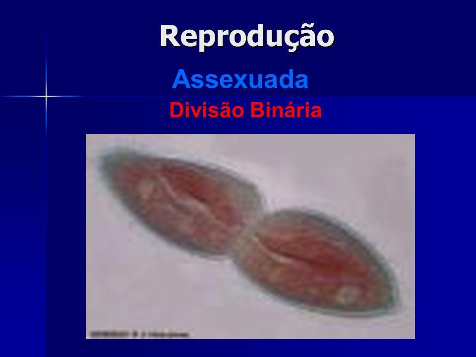 Reprodução Assexuada Divisão Binária