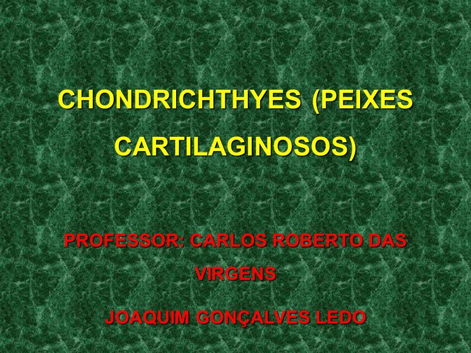 CHONDRICHTHYES (PEIXES CARTILAGINOSOS)