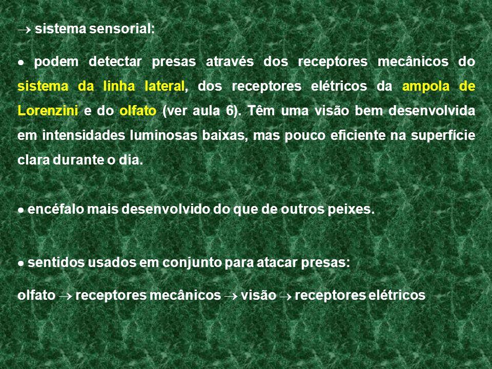  sistema sensorial: